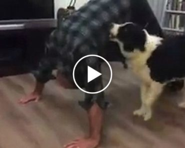 Dog Climbs All Over Guy Who's Trying To Do The 22 Pushup Challenge 2