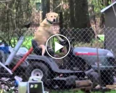 Solemn Tornado Broadcast Interrupted By Dog On Lawnmower 2