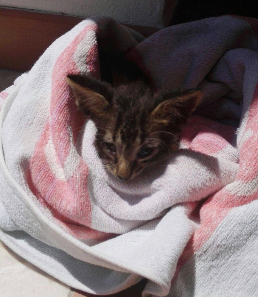 cat_Italia