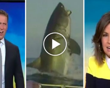 Footage Of A Huge Shark Leaves Two News Anchors Speechless 1