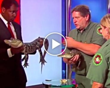 Alligator Freaks Out Reporter Creating A Hilarious Live TV Blooper 2