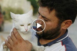 This Amazing Man Stayed Behind in War Torn Aleppo, Syria To Care for the City's Abandoned Cats 11