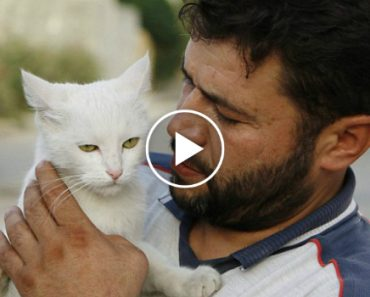 This Amazing Man Stayed Behind in War Torn Aleppo, Syria To Care for the City's Abandoned Cats 1