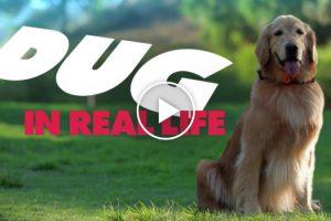 Pixar's Dug the Talking Dog in Real Life 11