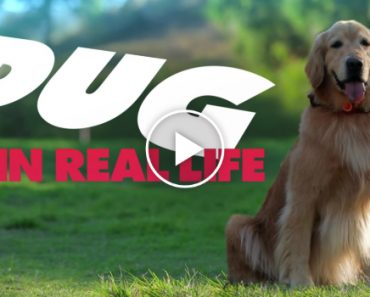 Pixar's Dug the Talking Dog in Real Life 3