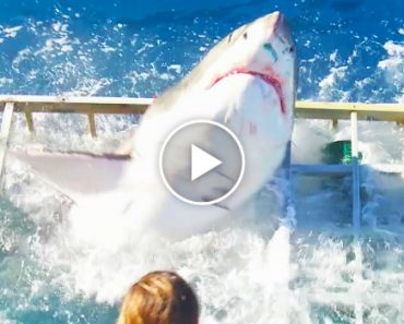 This Great White Shark Broke Into A Cage... With A Diver Still Inside 3