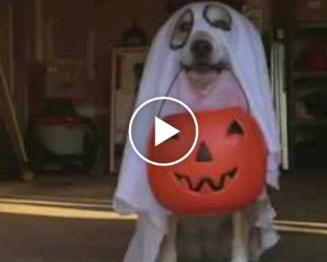 Trick-or-Treating Dog Hits the Jackpot 7
