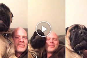 This Dog REALLY Hates His Human's Singing And Would Like This Fresh Hell To Stop 10