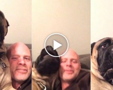 This Dog REALLY Hates His Human's Singing And Would Like This Fresh Hell To Stop 3