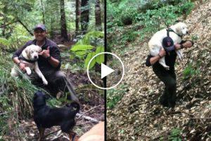 Blind Dog Rescued In Santa Cruz Mountains After A Week Missing 12