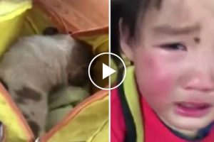 Tearful Toddler Begs Teacher Not To Hurt The Stray Puppy Found In Her Backpack 10
