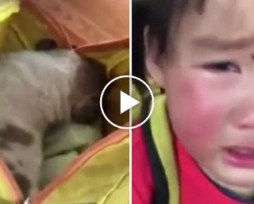 Tearful Toddler Begs Teacher Not To Hurt The Stray Puppy Found In Her Backpack 3