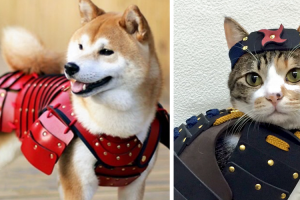 This Japanese Company Makes Samurai Armor for Cats and Dogs 11