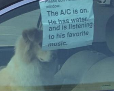 12 Funny Dog Tweets That Are Too Relatable 4