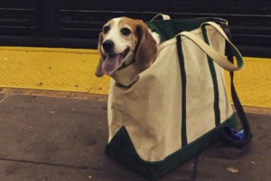 New York Subway Bans Dogs Unless They Fit In a Bag, So This Happened 10