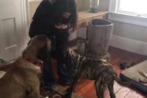 Big Dog Teaches Puppy How To Sit For Treats 10