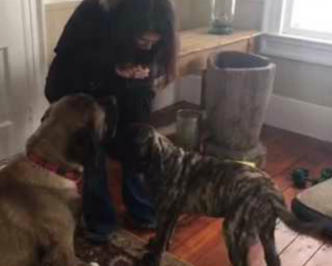 Big Dog Teaches Puppy How To Sit For Treats 7