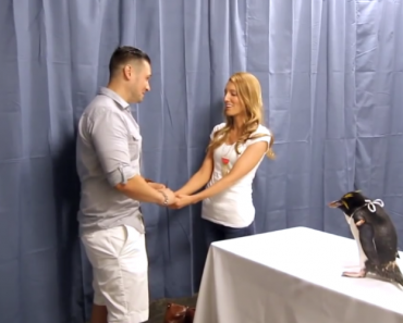 Adorable Penguin Helps With Surprise Proposal 1