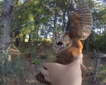 Owl Cut Free After Being Trapped In Fishing Line 9