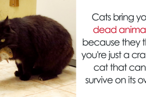 10 Amazing Cat Facts That You Probably Didn't Know 11