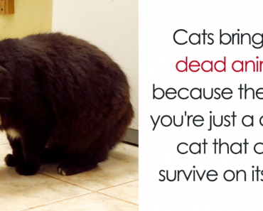 10 Amazing Cat Facts That You Probably Didn't Know 3