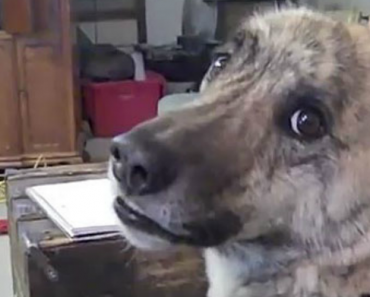 His Human Just Told Him There Isn't Any Food Left… Now Watch This Dog's Reaction! 1