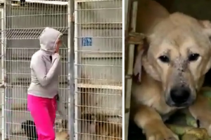 This Woman Couldn't Decide Which Dog To Adopt, So She Bought The Entire Shelter! 12