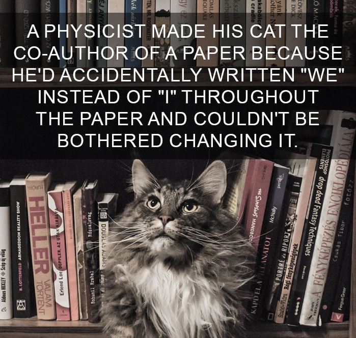 10 Amazing Cat Facts That You Probably Didn't Know 4