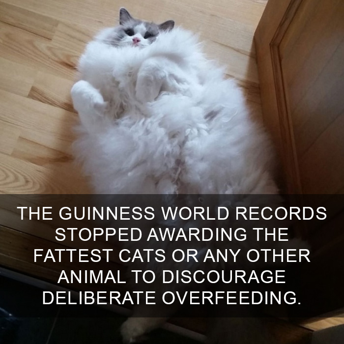10 Amazing Cat Facts That You Probably Didn't Know 6