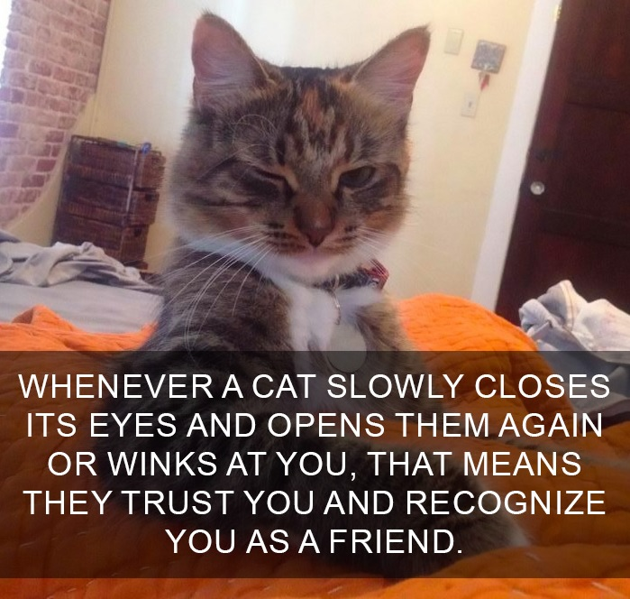 10 Amazing Cat Facts That You Probably Didn't Know 7