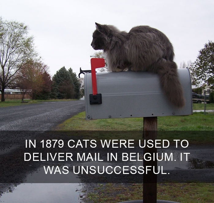 10 Amazing Cat Facts That You Probably Didn't Know 8