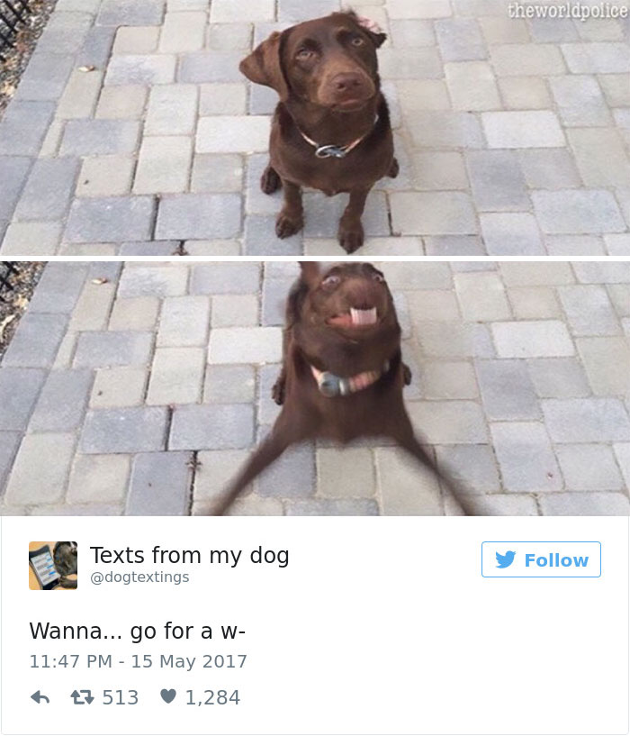 12 Funny Dog Tweets That Are Too Relatable 11