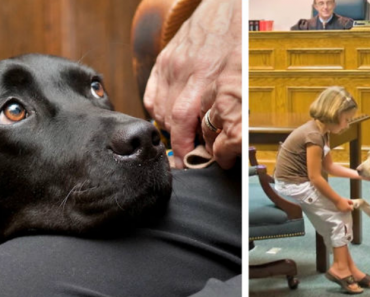 Courthouse Dogs Make It Easier For People To Testify In Front Of Their Attacker 9