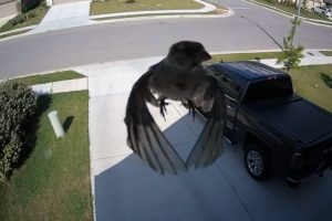 What's Going On Here? Weird Camera Illusion Makes It Look Like Bird Is Floating 12
