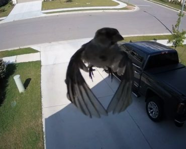 What's Going On Here? Weird Camera Illusion Makes It Look Like Bird Is Floating 7