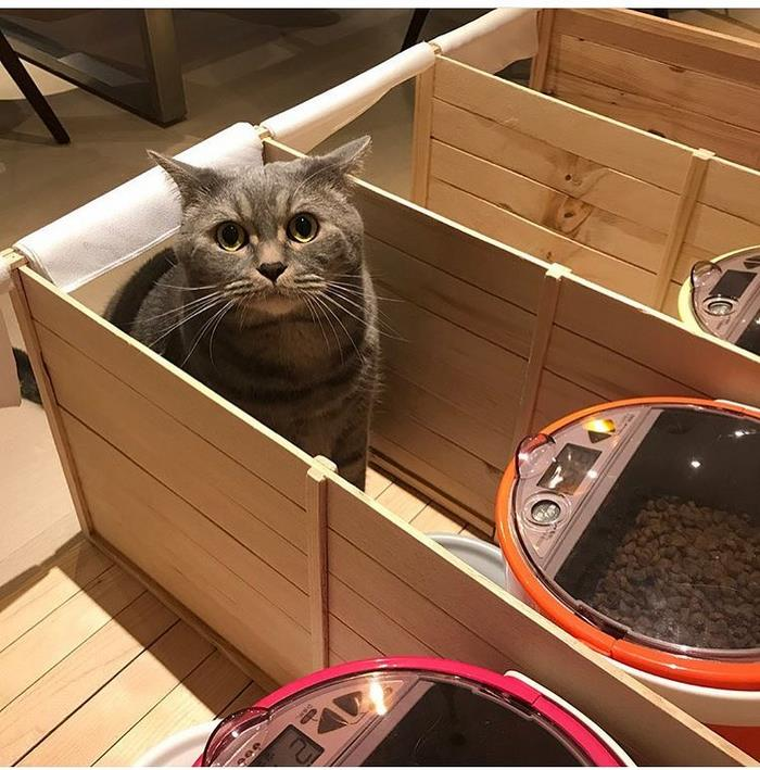 Fat Dad Cat Kept Eating More Than His Share, So His Owners Came Up With A Genius Solution 6