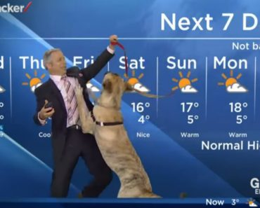 Ripple The Dog Ruins Weather Forecast 2