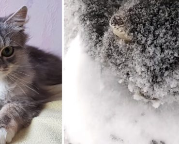 Compassionate Motorist Rescues a Freezing Six Month Old Kitten From The Side Of The Road 8