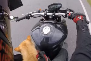 Motorcyclist Takes Injured Stray Cat On Epic Motorcycle Ride To Save His Life 12