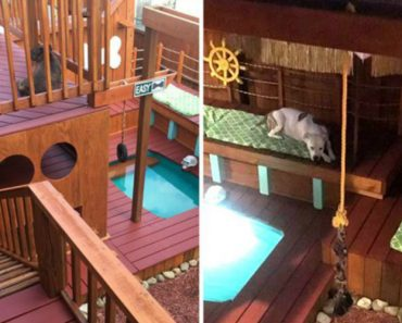 Guy Takes Two Years To Build Incredible 3-Story Backyard Play Area For His Dogs 1