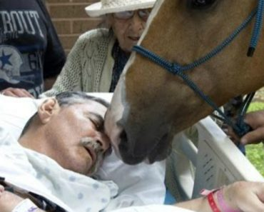 Man On His Deathbed Gets a Heartfelt Goodbye From His Two Best Friends, His Horses! 1