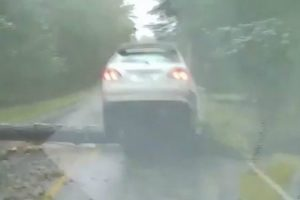 Heart-stopping Footage Has Captured The Moment a Woman Driver Was Almost Crushed By a Tree 12