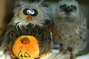 Little Owl Gets Down To 'Monster Mash' With His Favorite Stuffed Toy 11