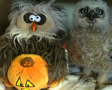 Little Owl Gets Down To 'Monster Mash' With His Favorite Stuffed Toy 4