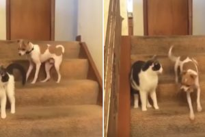 When This Cat Threw The First Punch, She Sent This Dog Into Turbo Mode 12