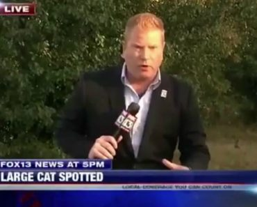 A House Cat Found The Perfect Opportunity To Photobomb A Live News Segment 6