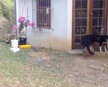 This Poor Dog Never Saw It Coming. And He's About To Get The Shock Of His Life 7
