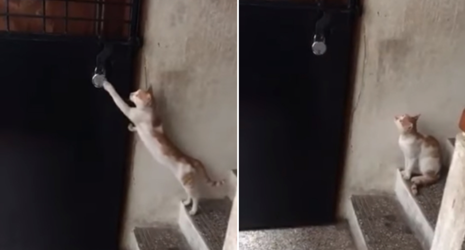 Cat Knocking On Door : A surprisingly well mannered cat politely knocks on the