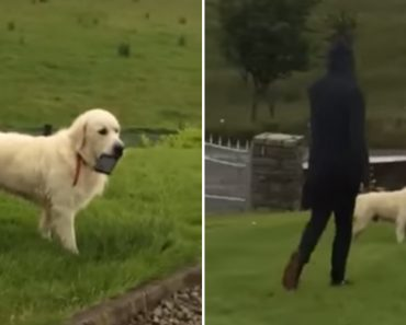 Dog Steals Owner's Phone And Refuses To Give It Back 3