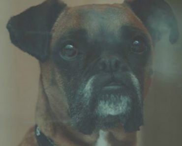 Dogs Trust Ireland Makes Emotional Plea To Place Its Long-Term Residents With Forever Homes 3
